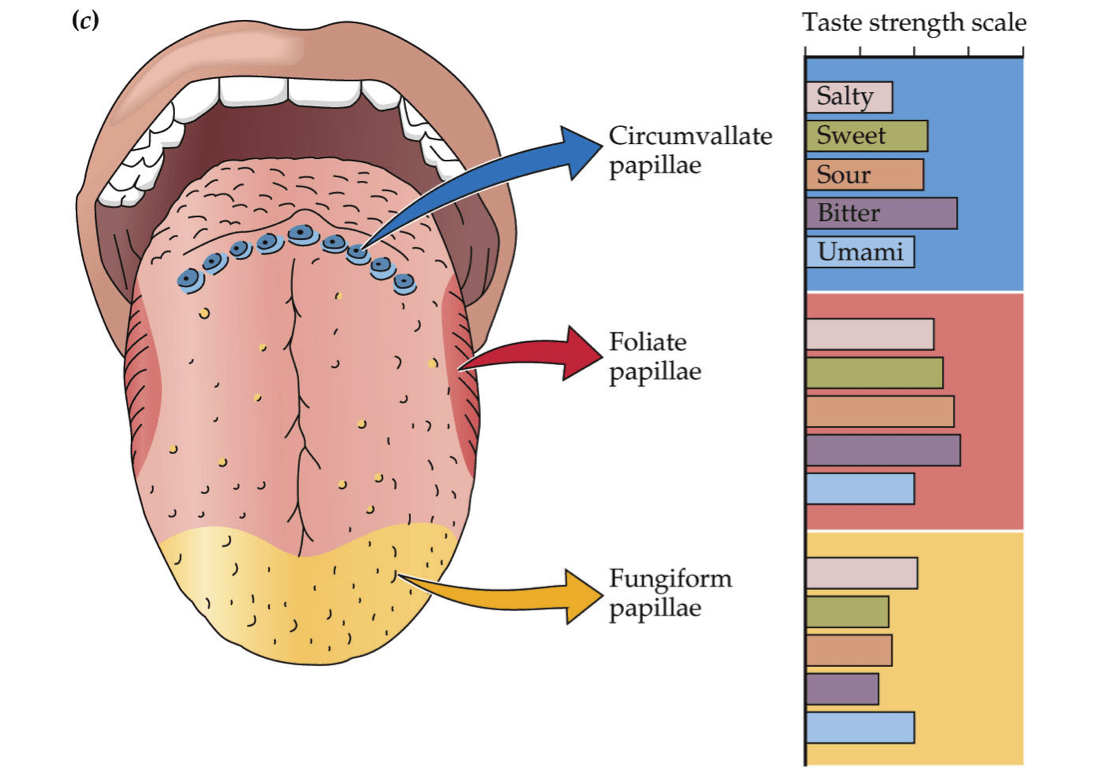 diagram of the tongue with labels chevy wiring diagrams retraining our taste buds josh gitalis