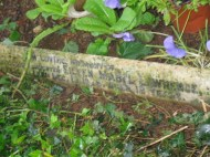 Headstone of Eileen Mabel Lawrence at Church of St. Mary the Virgin at Gayton