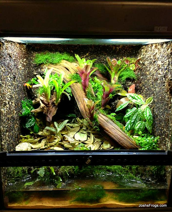 Terrarium Construction - Josh's Frogs How-To Guides