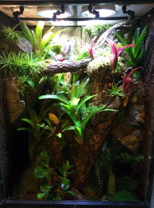 What Uvb Bulb Do I Need For My Pet Reptile Or Amphibian Josh S Frogs How To Guides