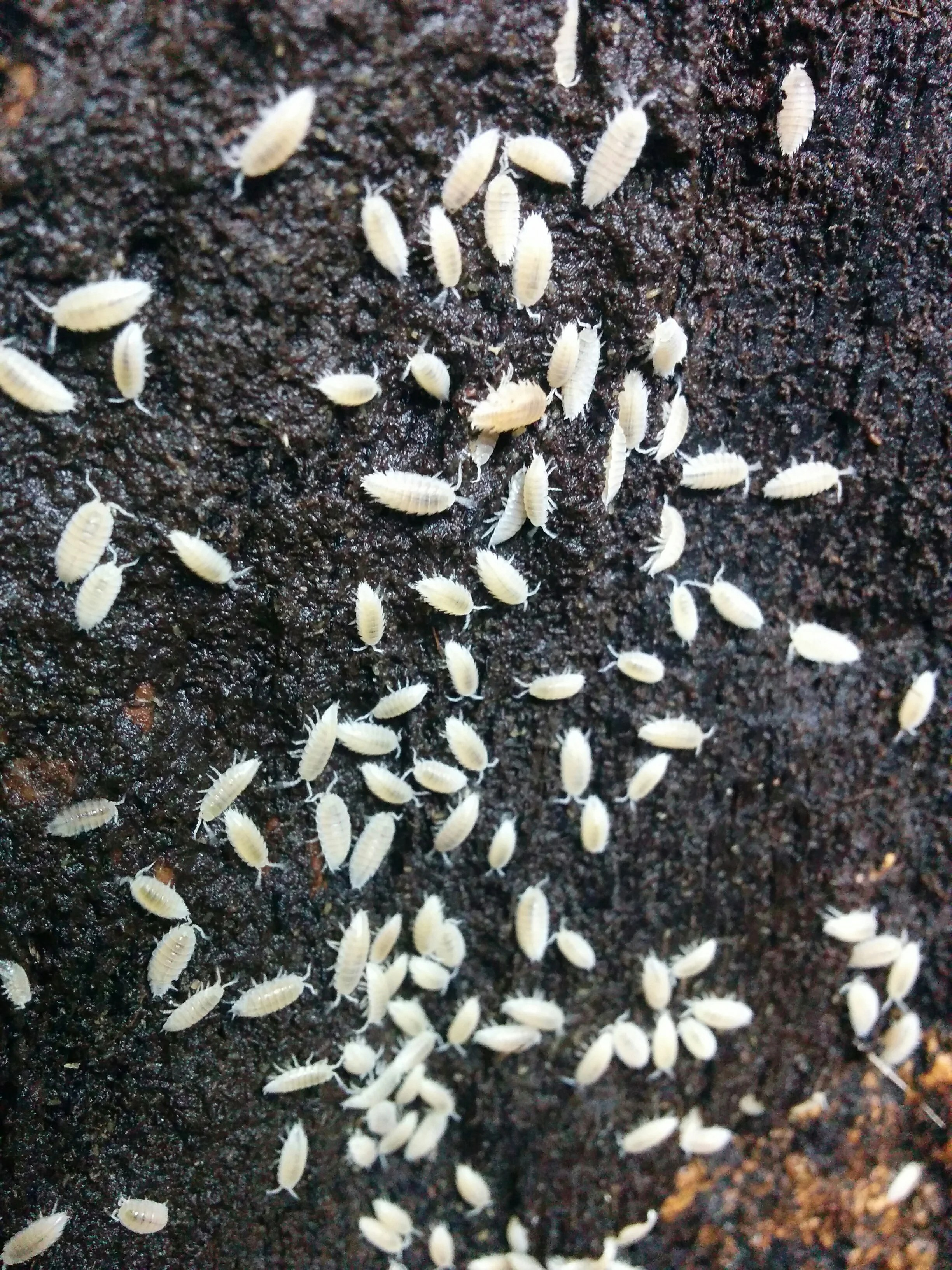 Wood Mites In Snake Cage