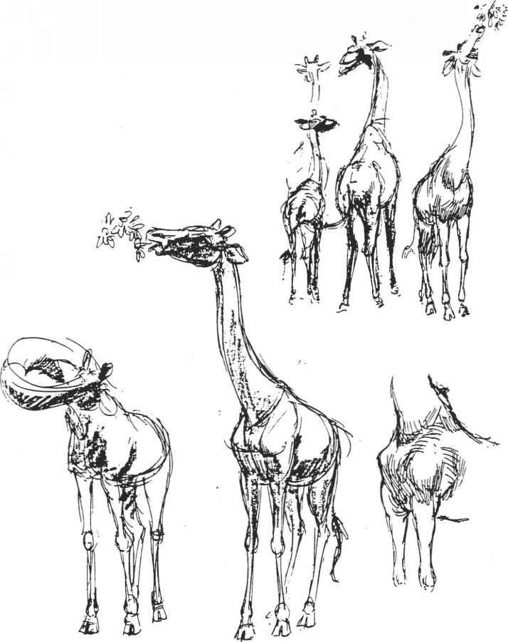 A IVIll A i CI Drawing Animals