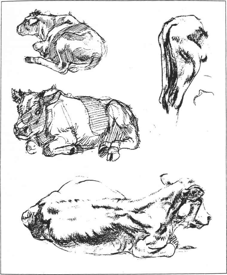 A IVIll A i CI Drawing Animals