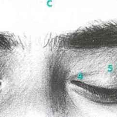 Diagram Of The Left Eye 97 Jeep Wrangler Radio Wiring Downward Gaze Vs Closing Facial Expressions