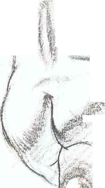 The Vilppu DRAWING MANUAL BASIC FIGURE DRAWING Xaa Figure