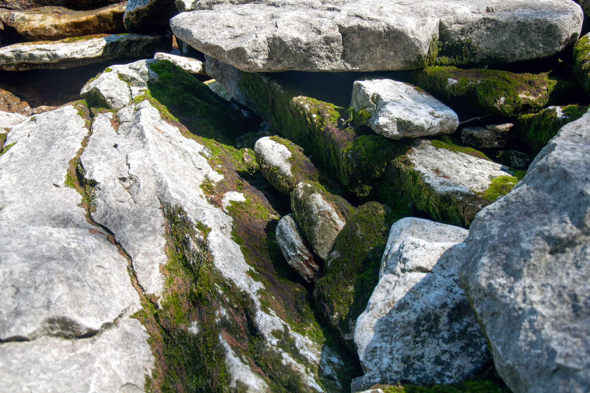 Rocks at Marblehead (May 2010)