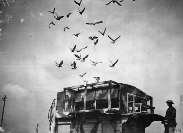 pigeons coming home to roost