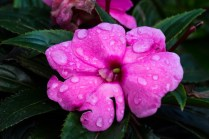 Blomst med regndråper