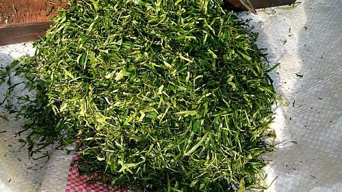 Picture showing shredded atama leaf