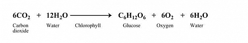 Balanced Chemical reaction of Photosynthesis