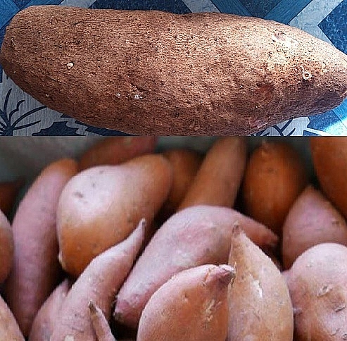 Photo of Sweet potato vs Yam: Difference between yams and sweet potatoes with images