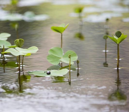 Herstel grondwaterstand in hooggelegen deel van Nederland duurt tot voorjaar 2020