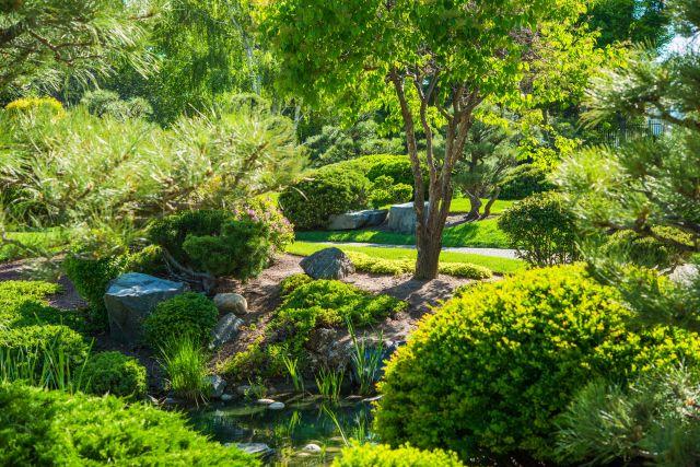 jardin japonais avec bassin