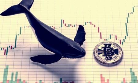 Baleine bitcoin