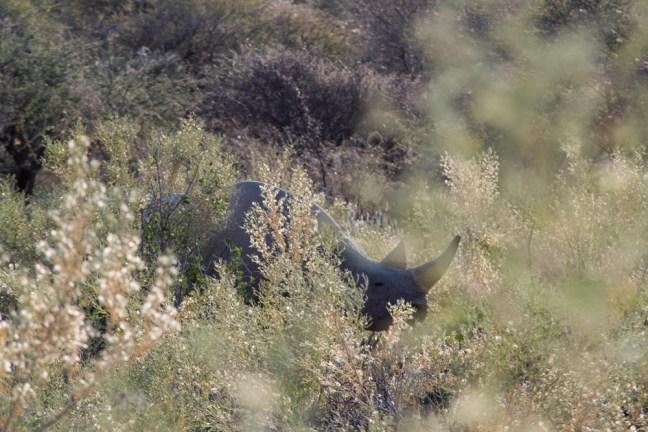 Etosha_Namibia_rhino