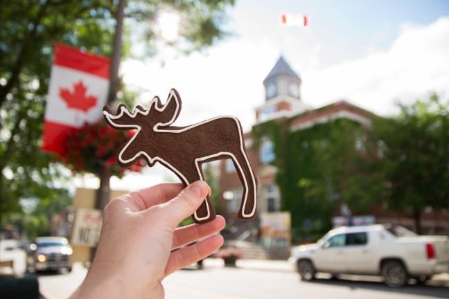 Algonquin Ontario_moose