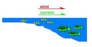 Where to Find Fish on Windy Days