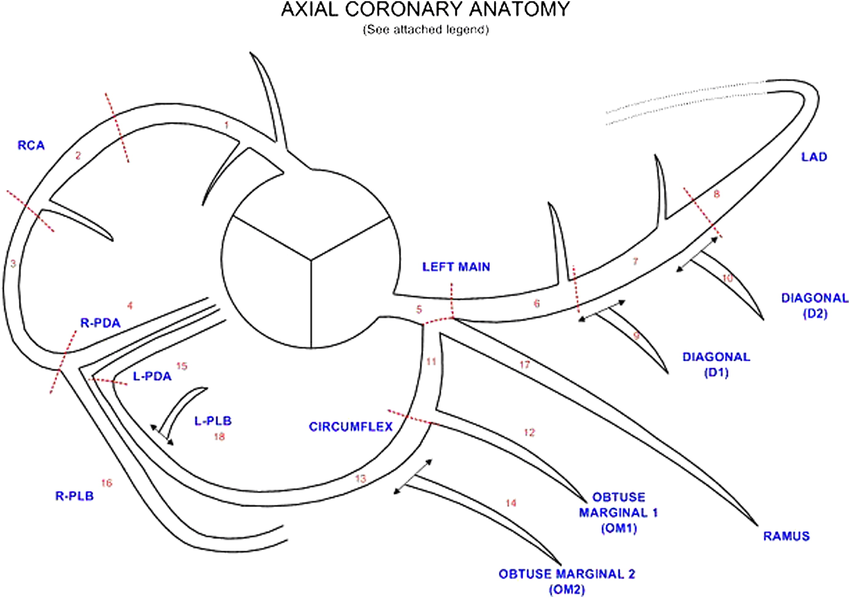 coronary arteries diagram branches 2002 pontiac radio wiring scct guidelines for the interpretation and reporting of