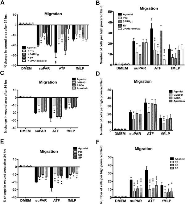 Role of formic receptors in soluble urokinase receptor
