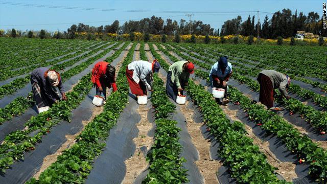 Agriculture recrutement