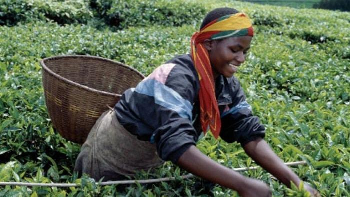 Miracle ou mirage rwandais