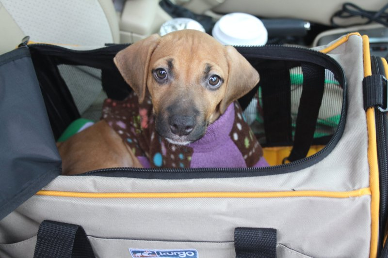 Puppy Traveling
