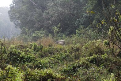 Female rhino with her calf