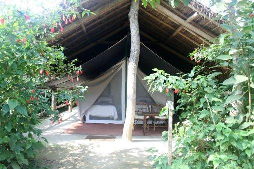 Glamping tents at Chitwan National Park