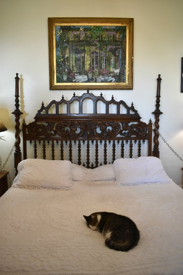 Cat sleeping on bed at Hemmingway House