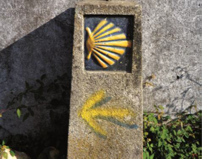 yellow-shell