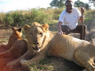 ida-lions