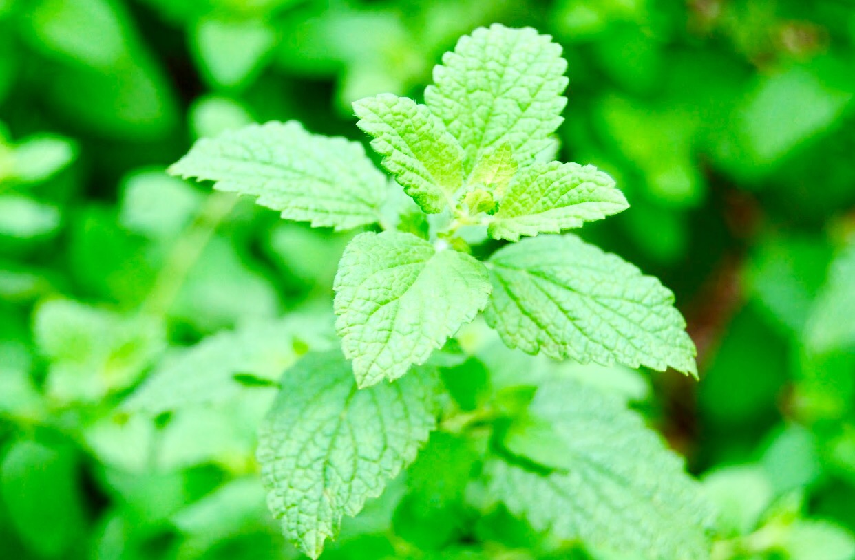 Herbs That Heal Journey With Healthy Me