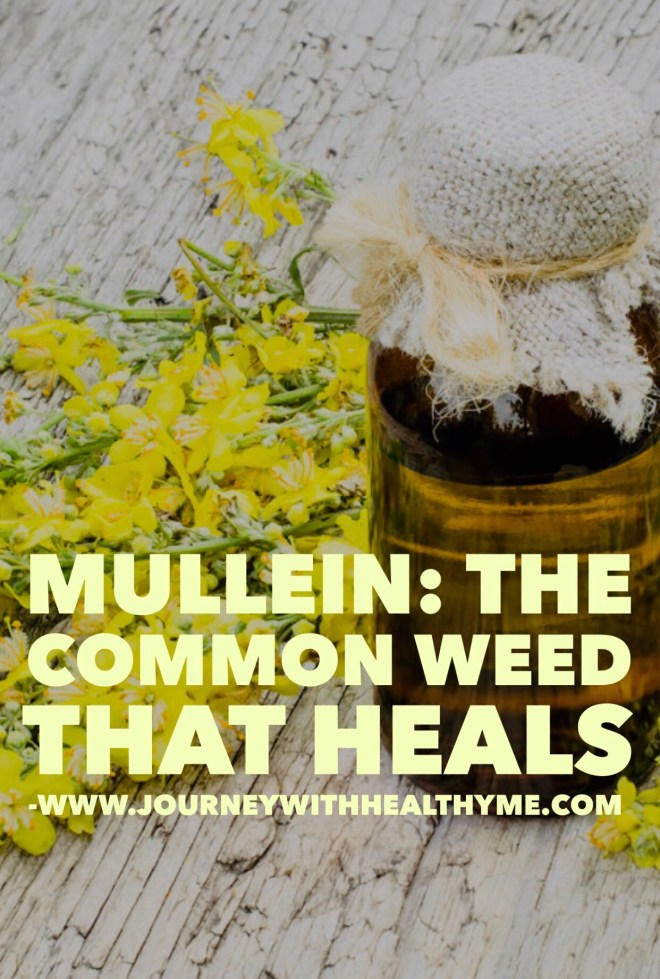 Mullein The Common Weed that Heals