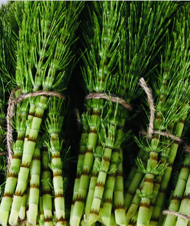 Horsetail Herb Bundles