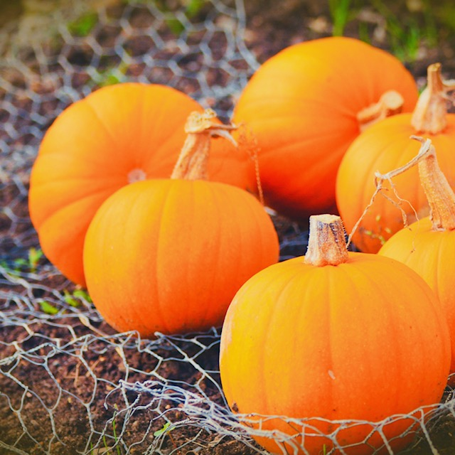 Health Boosting Pumpkins