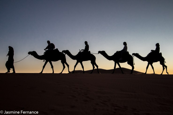 Camel riding in the Moroccan Sahara at sunrise