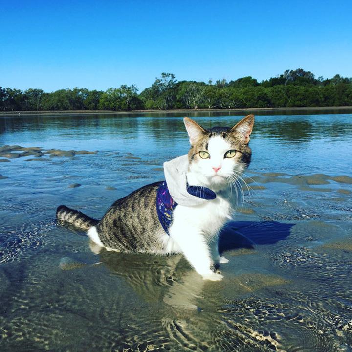 Adventure Kitt