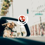 10 Most Dog Friendly Cities In The World