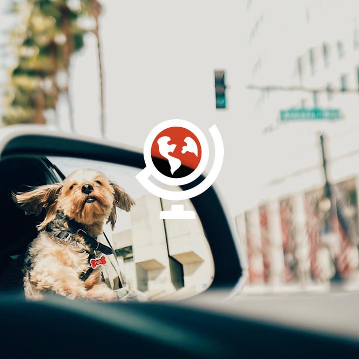 most dog friendly cities