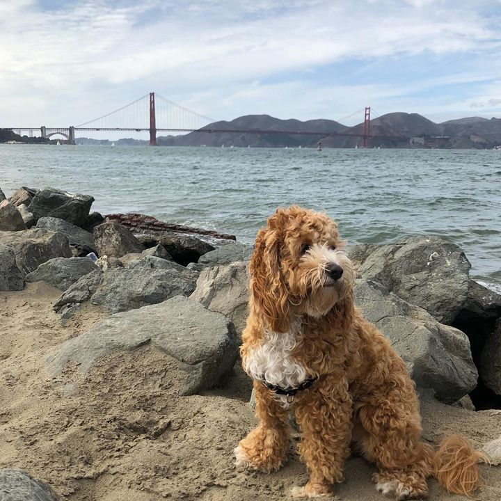 sanfranciscodogs