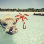 11 Adorable Island Animals to Visit