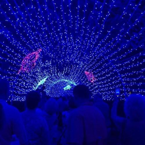 light displays