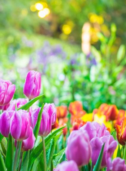 The happy list – Klaar voor de lente