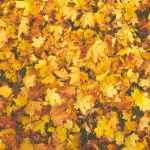 Het is herfst! Dit is waarom ik er zo dol op ben