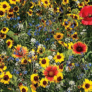 Bee Buddies Wildflower Mix