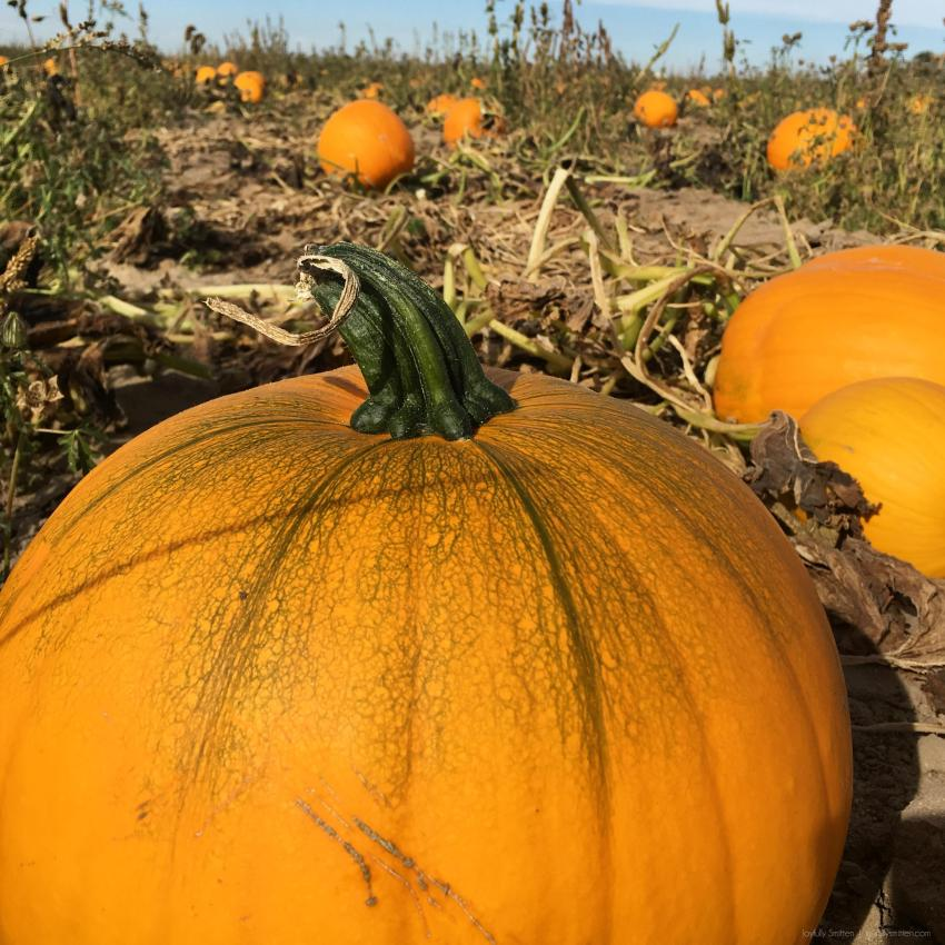 Our second year in a row of going to the Fritzler Farms in LaSalle, CO which is filled with excellent family activities and a great pumpkin patch!