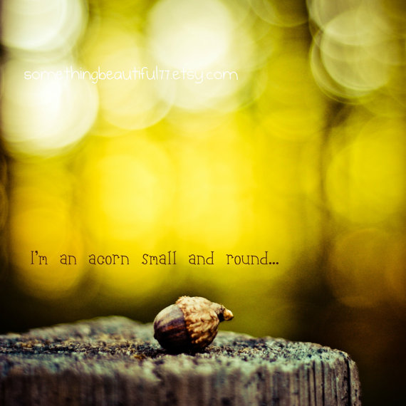 I Am An Acorn Small And Round