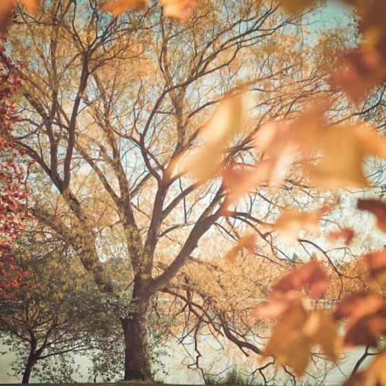 Georgianna Lane Autumn Trees Image From etsy