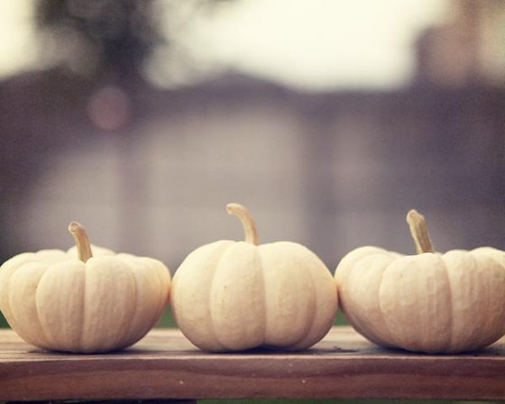 Ghost Pumpkins by Amelia Kay Photography