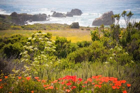 Breathtaking Big Sur